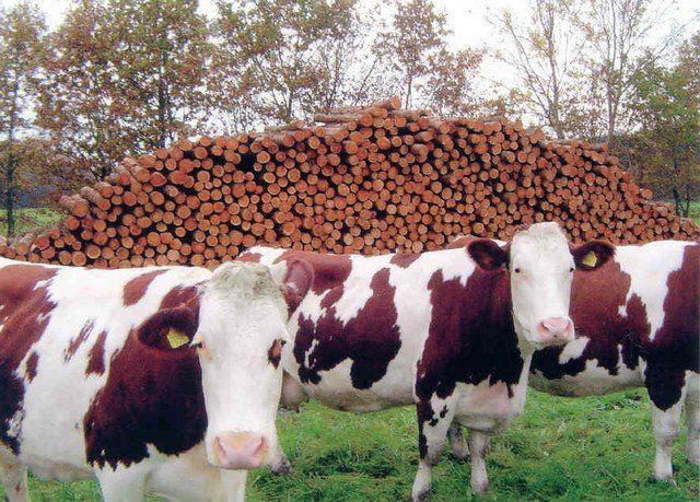 Bij boerderij De Stegge koop je tijdens de voorjaarsbeurs heerlijke rundvleesproducten