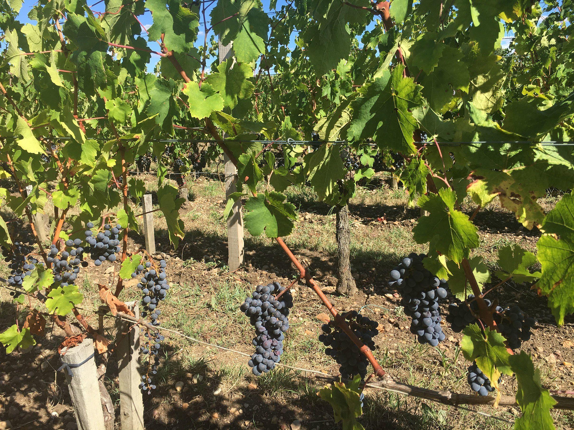Wijnimporteur Laurent Richard neemt heerlijke wijnen mee uit Frankrijk, Italië, Spanje en Argentinië