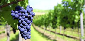 Heerlijke wijnen van Wijnkoperij Reijnen proef je bij Exclusive Spring Fair